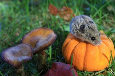 http://3.bp.blogspot.com/_IrmufSyCOBw/Sm_Z5PBh5KI/AAAAAAAABKM/7etumuVZYWE/s400/pumpkin.bmp