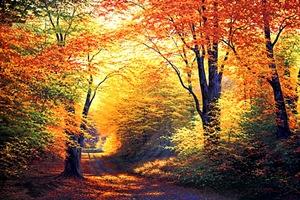 Outono, a estação da reflexão
