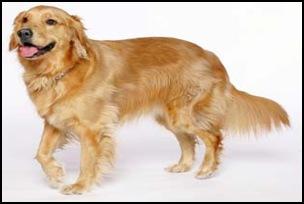O que podemos aprender com os cães