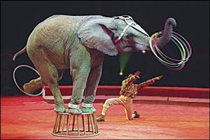 O elefante e os repolhos. Piada