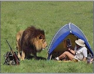 Os caçadores e o leão. Piada