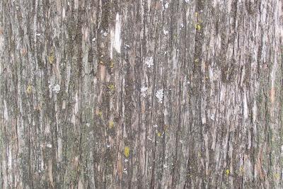 texture bark wood