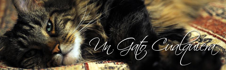 Un Gato Cualquiera