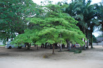 Brandon in Benin
