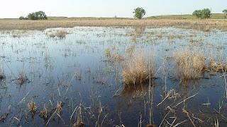 [Wetland at Seier NWR]