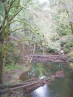Lagunitas Creek, Samuel P. Taylor State Park