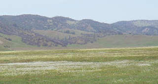 Bear Valley wildflowers, Colusa County