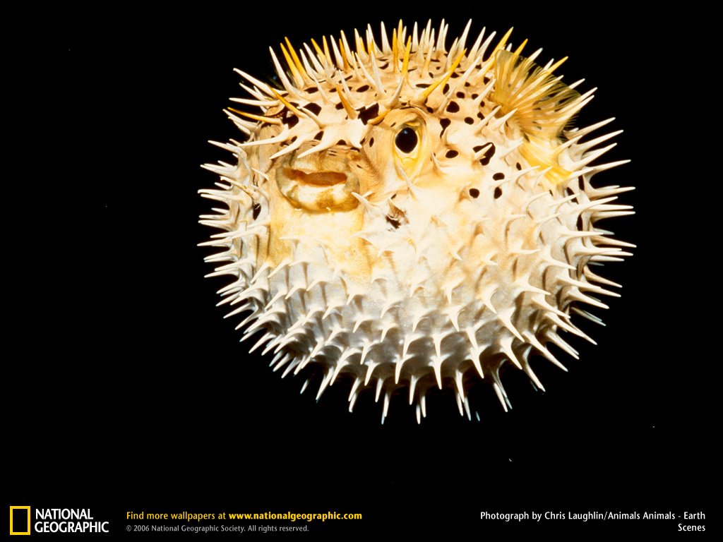 Personal transformation opportunities 8 1 10 8 8 10 for Puffer fish puffing