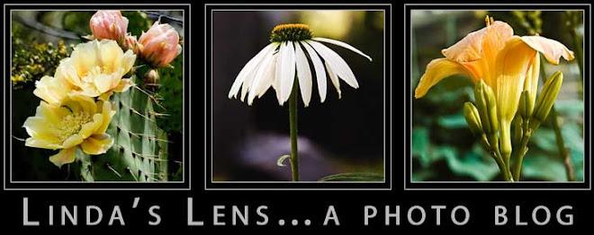 linda's lens