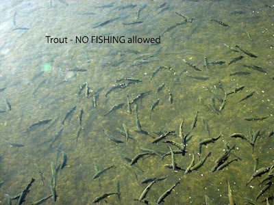 You 39 re invited to travel with us to see the usa spearfish sd for Spearfish fish hatchery