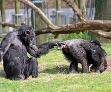 Cosas de Gorilas...