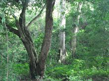 Al interior del bosque seco