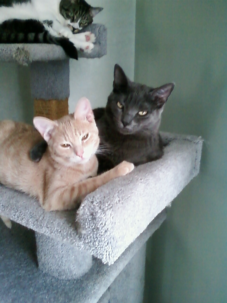 Dr di 39 s vetblog do indoor cats have stress you betcha for Having an indoor cat