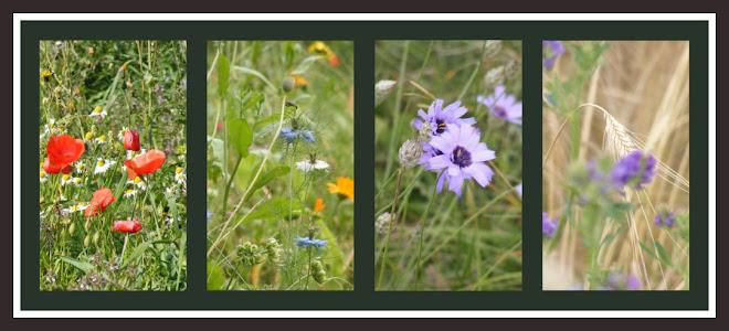 http://3.bp.blogspot.com/_J67c-BFz6MI/S2WDYFO_2zI/AAAAAAAAAG0/glxxEvtkyxs/S660/fleurs+d%27%C3%A9t%C3%A9.jpg