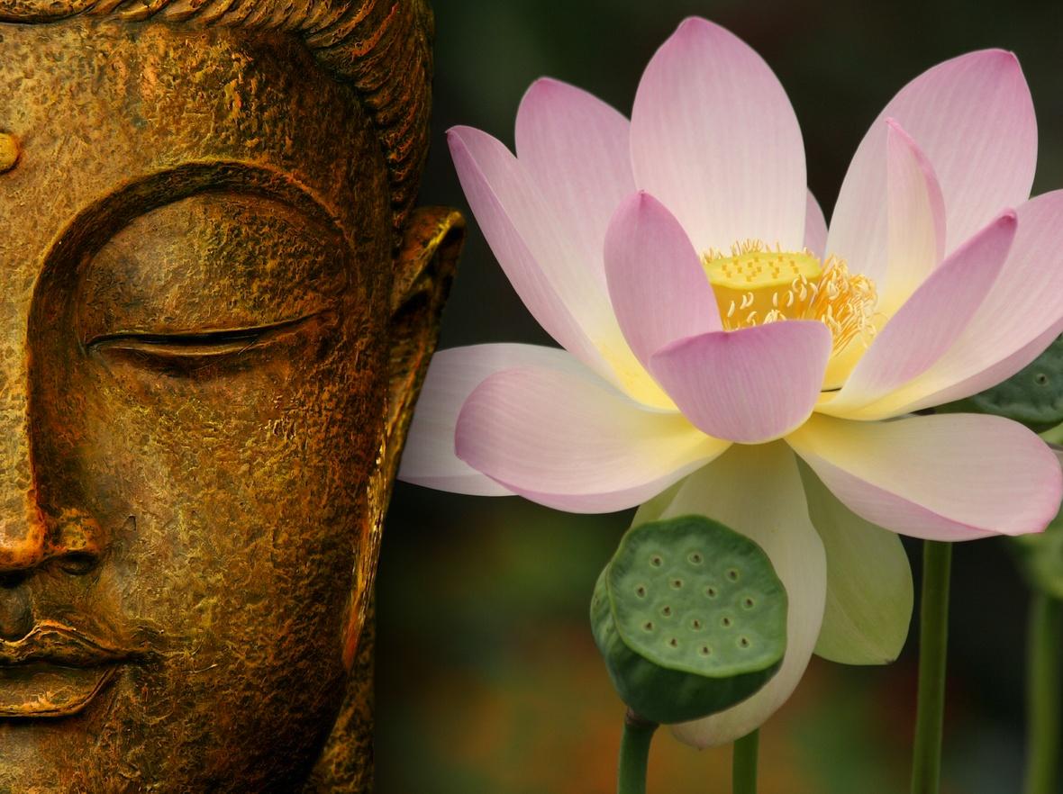 http://3.bp.blogspot.com/_J6JiYTCvb3I/THnu3nINPgI/AAAAAAAAAH0/0HAdLwTUyLA/s1600/buddha-wallpapers-photos-pictures-lotus.jpg