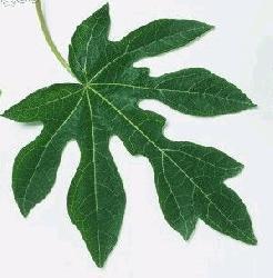 Zulkifli sahabuddin makalah daun tulang daun sejajar berbentuk seperti garis garis sejajar mulai dari pangkal daun hingga ujung daun tiap tiap ujung tulang daun menyatu ccuart Image collections