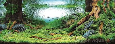 Самые красивые аквариумы IAPLC 2008г