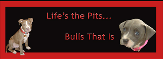 Life's the Pits... Bulls that is