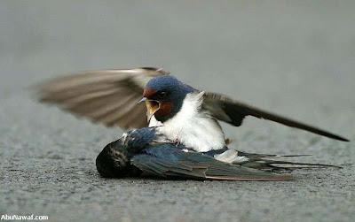 kisah burung