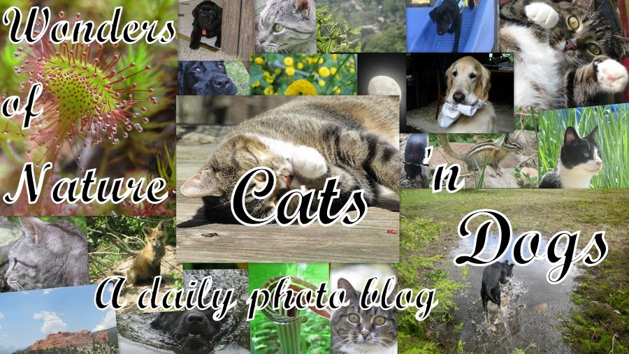 Wonders of Nature, Cats 'n Dogs