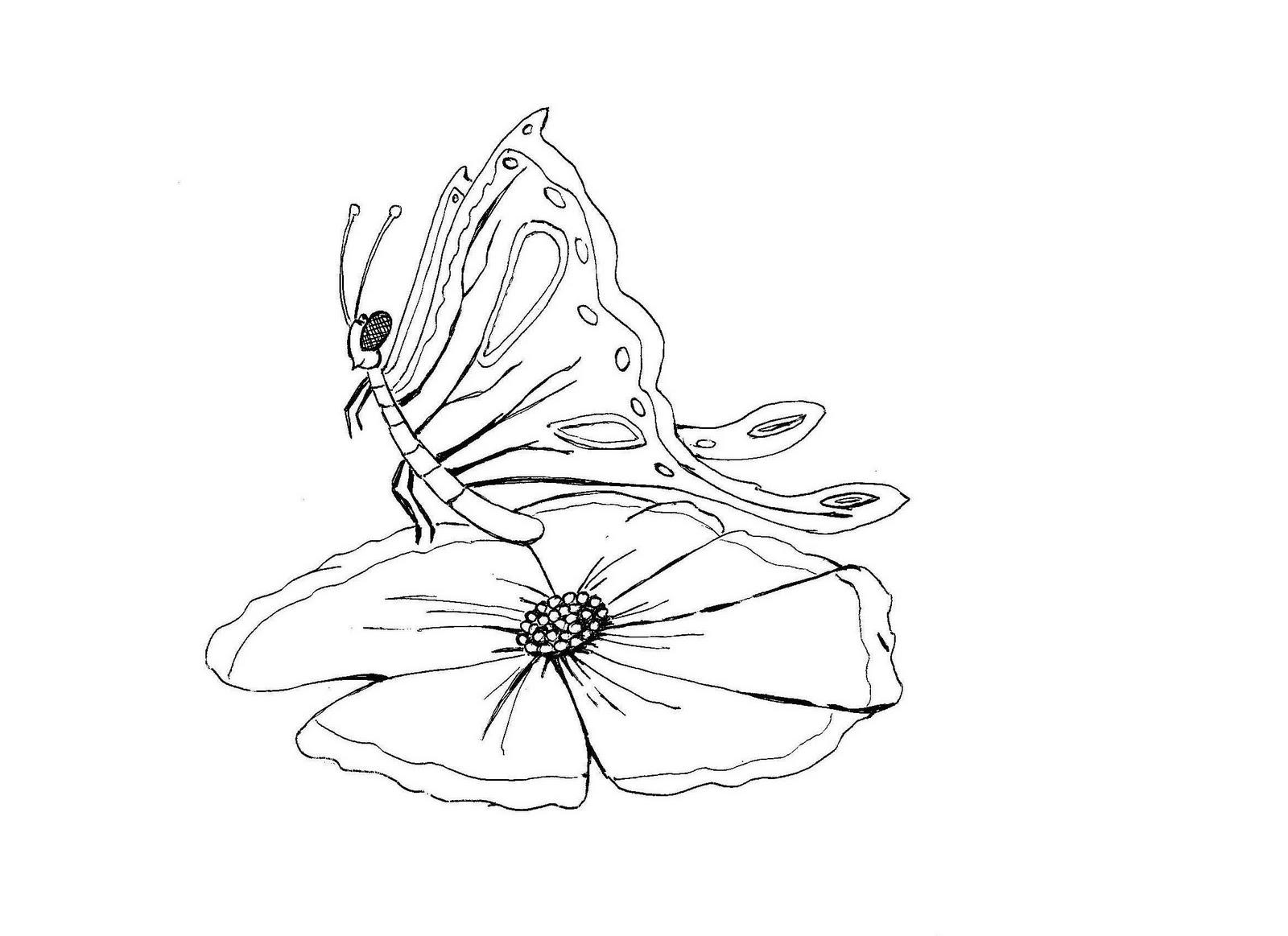 Colorir desenhos de animais Desenho de borboleta para colorir