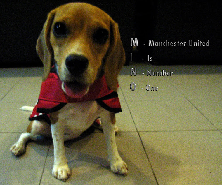 Mino My Beagle -
