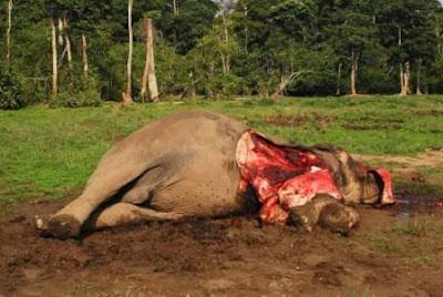 Xov Xwm tuaj ntawm Is Ntos Nes Xias teb tuaj ( Indonesia ) Eleph+tuer