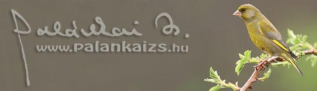 palankaizs.hu