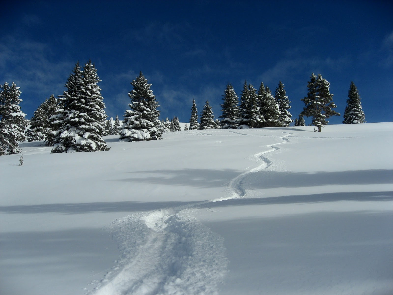 Vail Fresh Tracks in Powder, Mongolia Bowl