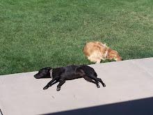 Brock & Sunny Chilaxin'