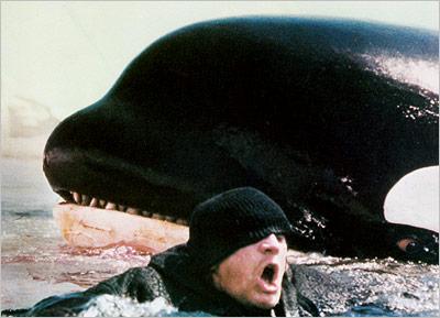 Dreams  Killer Whales and SharksOrca Bite
