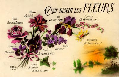 Le jardin de v rone le langage des fleurs - Langage des fleurs amitie ...