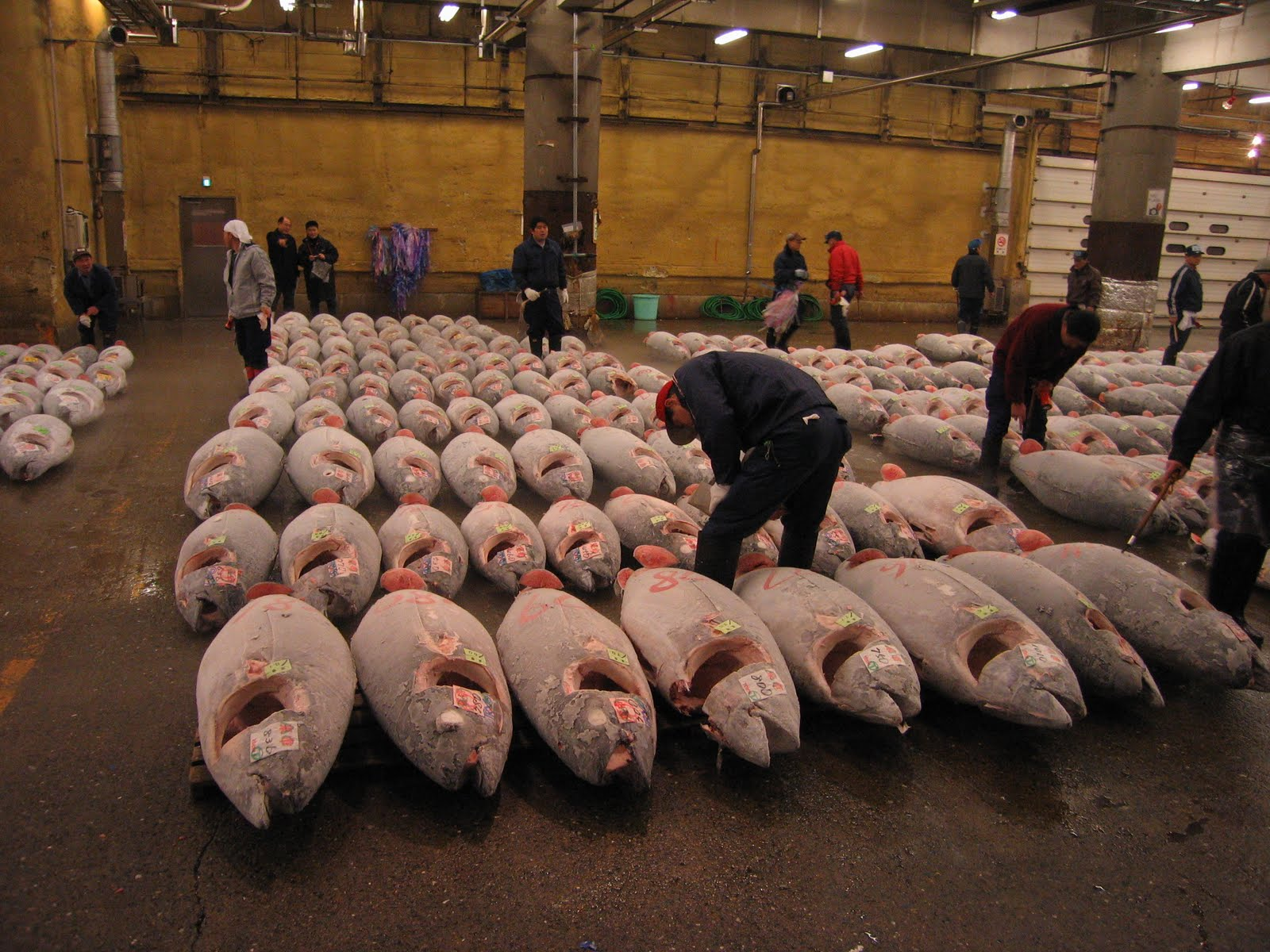 Tuna issues and discussion for Tsukiji fish market