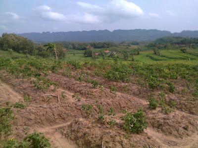ladang pertanian