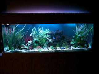 Beautiful Furniture fish tank