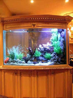Beautiful Aquarium Furniture