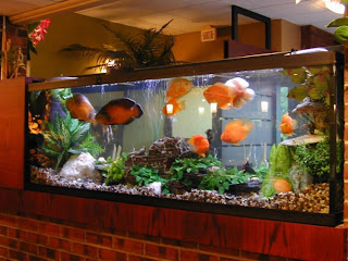 Fish tank Furniture
