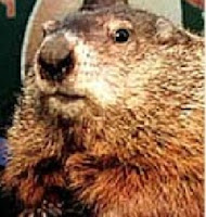 close up of ground hog face