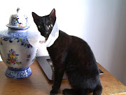 Entretanto cresceu, mas é um lindo gato preto, e outros passaram à frente!