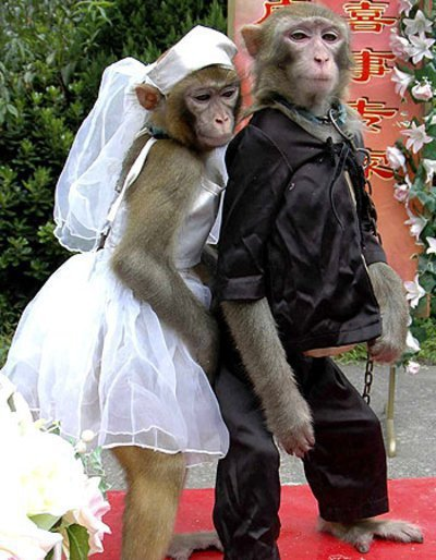 Funny-Monkey-Couple+Romeo+Juliet.jpg (311×400)