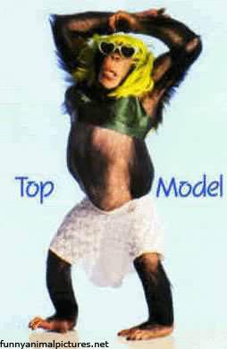 funny_monkey_model.jpg (254×390)