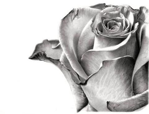 Imágenes para dibujar a lápiz de rosas - Imagui