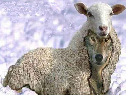 falso, perfil falso, lobo em pele de cordeiro