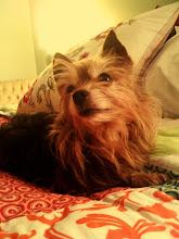 Wonder Pup