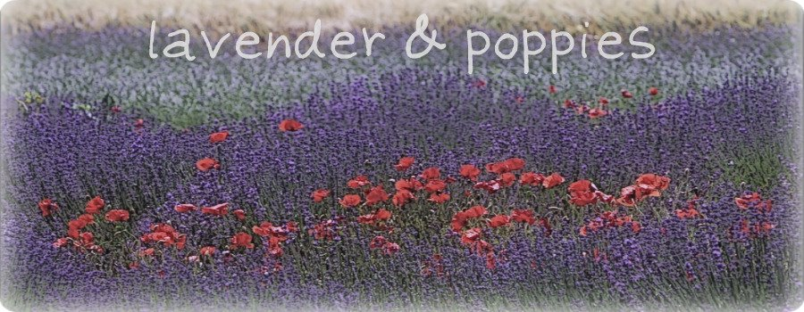 Lavender + Poppies