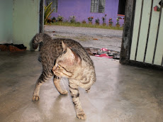 CAT, KUCING BERKAKI TIGA.