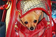 My pocketbook pooch