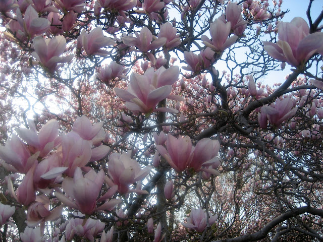 Magnolia Magic
