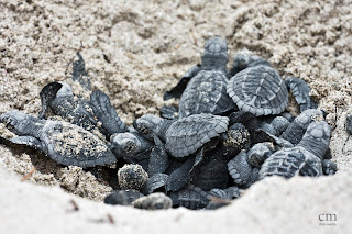 chris martin photography _turtles 4