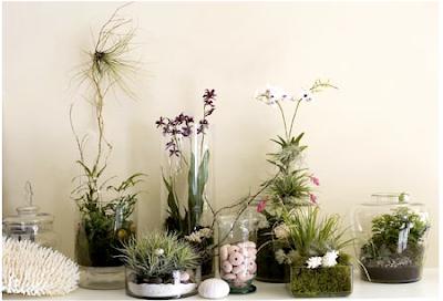 space,design,portland,oregon,vignettes,terrariums,plants,gardens